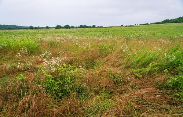 Landscape at Wilson's Creek National Battlefield