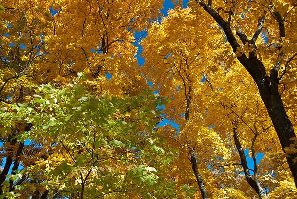 Missouri Fall Colors