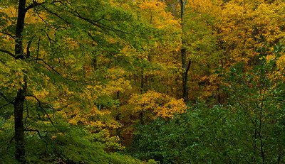 Mark Twain National Forest, Missouri Ozarks