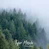 61  Trees into Fog