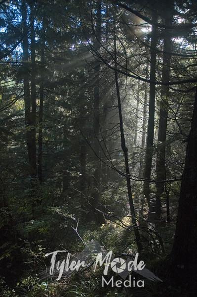 28  Trail