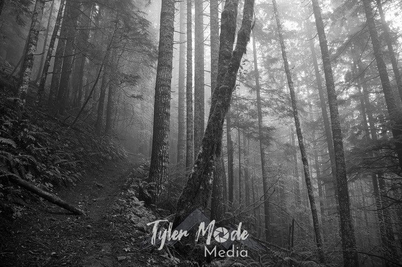 4  Foggy Trees and Trail B&W