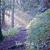 12  Sun On Trail