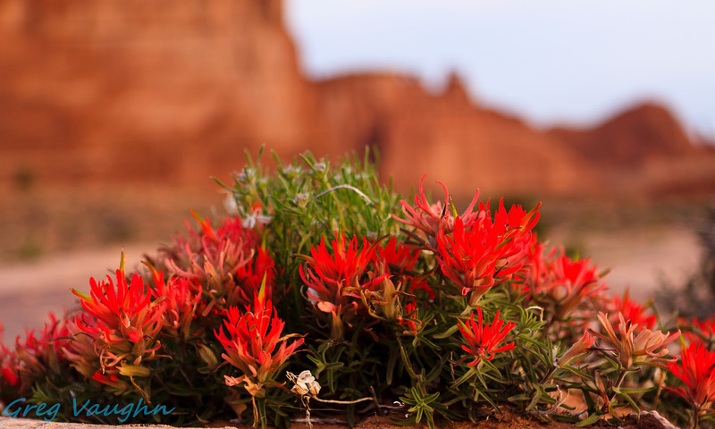 Sunrise on Flowers at Courthouse Wall n Arches NP, Utah