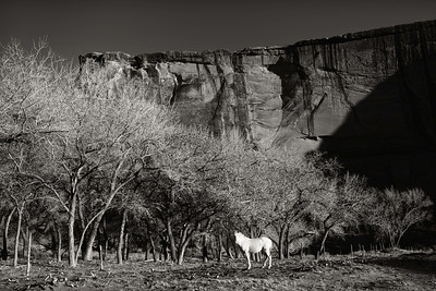 Navajo Horse - Canyon De Chelly, AZ