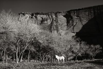 Navajo Horse - Canyon De Chelly, AZ