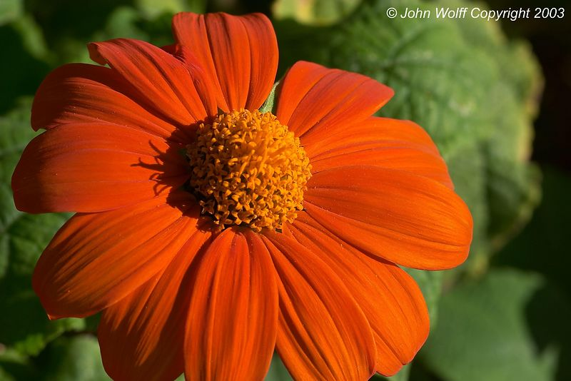 <b> Orange flower from formal gardens </b>