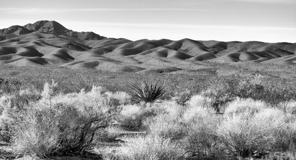 Mojave National Preserve, California, Dec. 2009