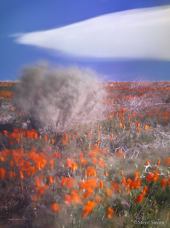 Opium Dreams Antelope Valley Poppy Fields State Preserve