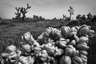 Arthur B. Ripley Desert Woodland State Park California