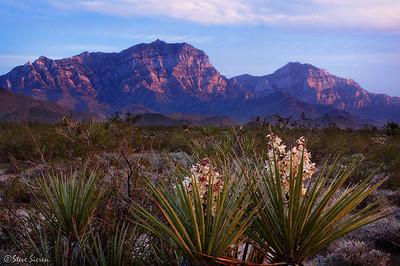 Yucca Bloom - Mojave Nature Preserve