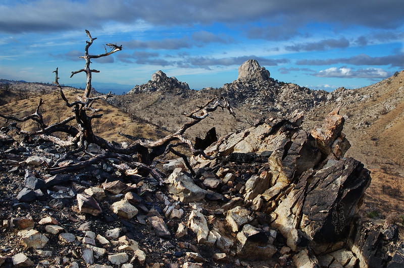 The Aftermath - Devastation after a fire clears out an ecosystem for a new beginning.  Invasive plants are one of the biggest threats to the Mojave Desert, they create extra fuel for fires that wouldn't normally be there.  Mojave Nature Preserve, California