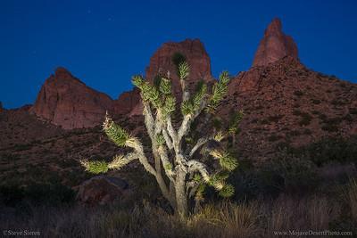 Mojave National Preserve Peaks Joshua Tree Light Painting
