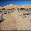 Hiker at Kelso Dunes