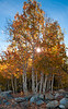 Fall aspens around Virginia Lake, Lee Vining CA