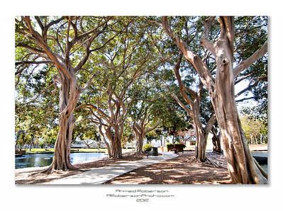 Tewinkle Park Trees