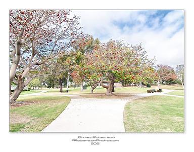 Budding Trees (Tewinkle Park)