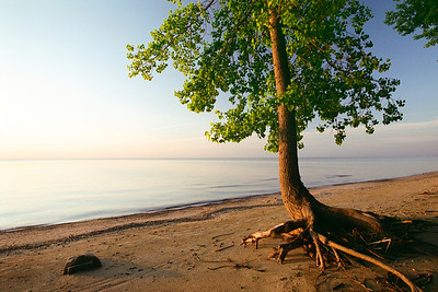 "Sunrise on the beach. This cottonwood didnt realize i was hiding behind a large rock when he decided to make his mad scramble to the lake for a drink of water.  *For information on purchasing prints and canvas gallery wraps, click the ""Purchasing"" tab at the top of the page. If viewing on your mobile device, scroll to the bottom of the page and click the ""Full Site"" tab to view as if you were on your home PC and then go to the ""Purchase"" tab to for purchasing info. In mobile mode, you will not see the standard navigation bar with the ""Purchase"" tab."