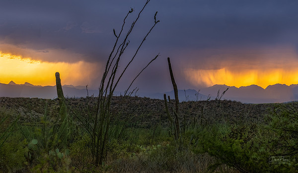Sonoran Monsoon