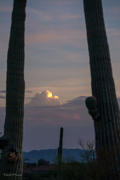 Saguaro Window