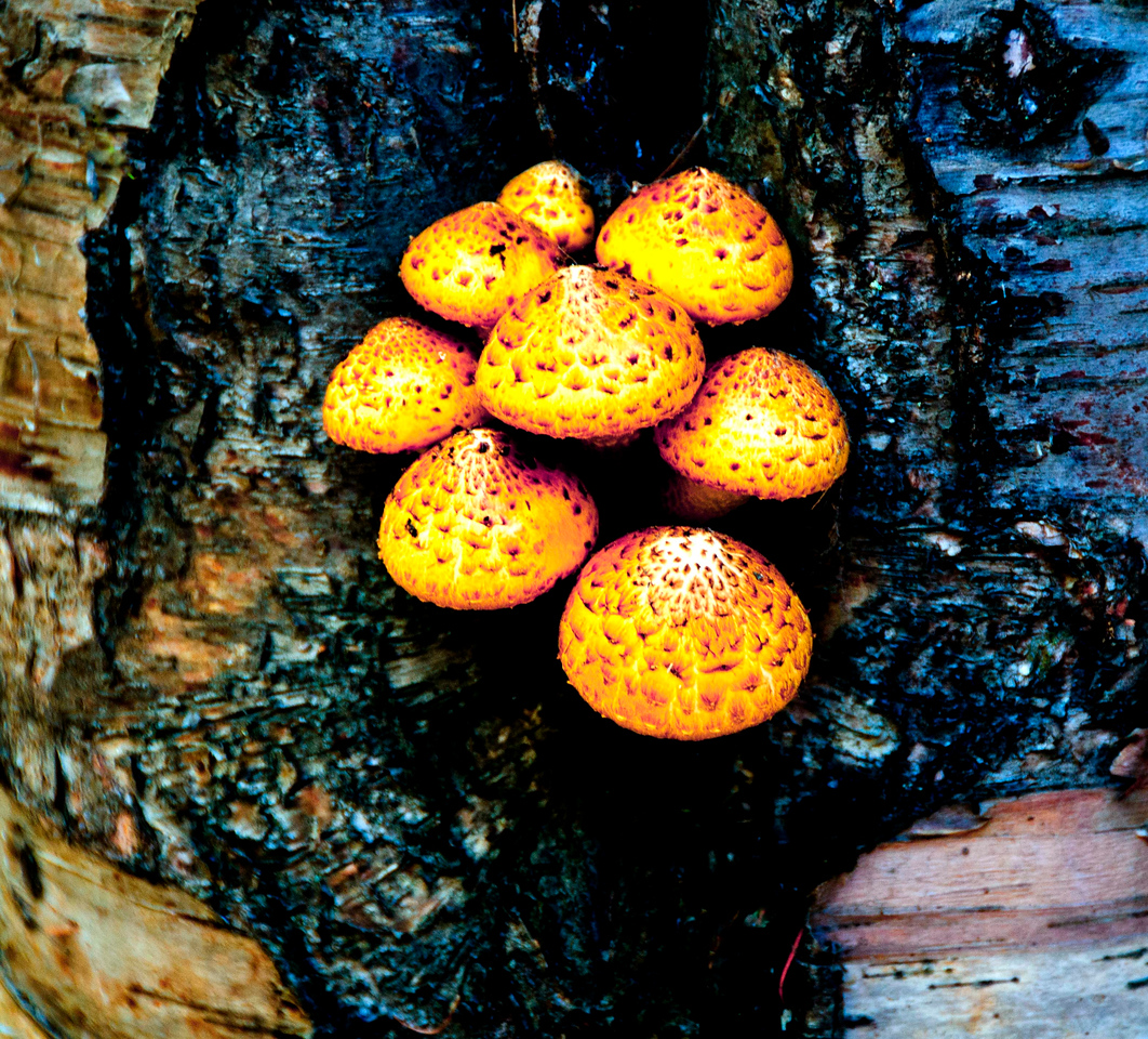 Fungii can be pretty too