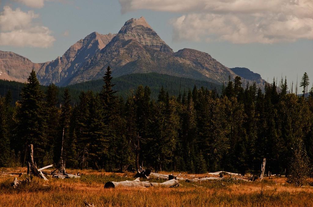 Montana Majesty