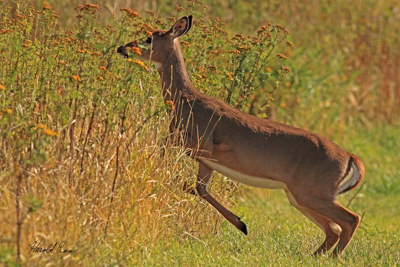 A deer taken Sep 23, 2010 near Bozeman, MT.