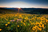 Wildflowers and sunrise, Mt. Washburn