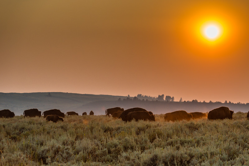 Sunset in the Lamar Valley of Yellowstone
