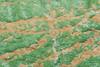 colorful algae mat at Porcelein Basin
