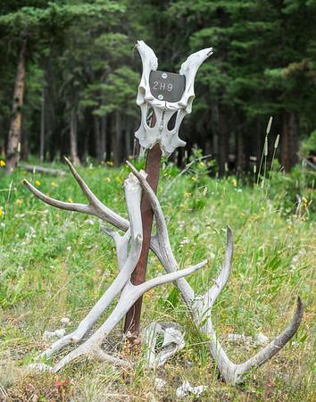 boneyard art in Yellowstone, campsite 2H9