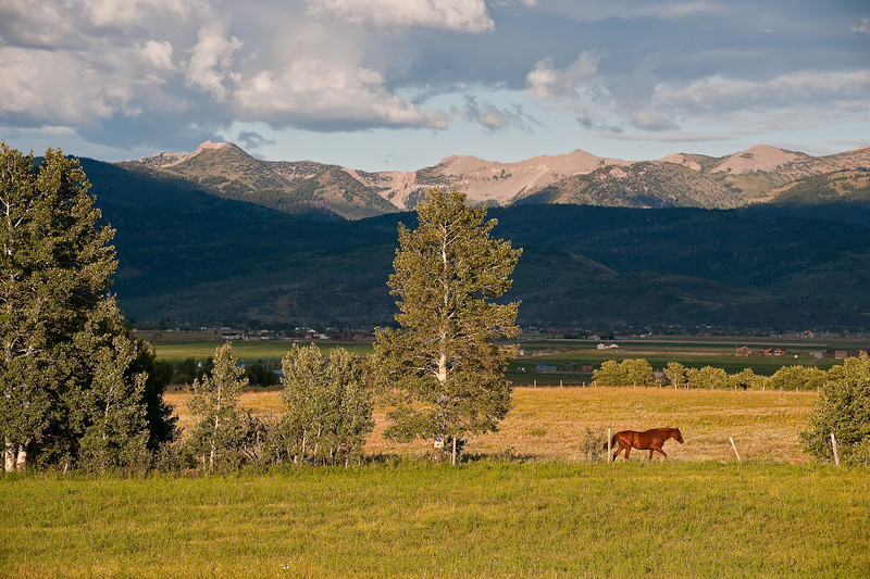 Horse and meadow with the Teton Range behind Victor, Idaho