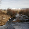 Early Spring in Metcalf Wildlife Refuge, Stevensville, MT