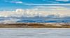 03-2014 Freezeout Lake Snow Geese