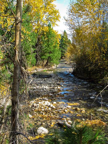 Lower Mill Creek near Hamilton, MT