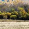 Deer playing along the creek north of Hamilton, MT