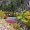 Fall colors along the Bitterroot River South of Darby MT