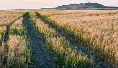 Fields of Green & Gold