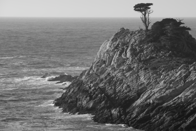 Cypress, Point Lobos Reserve