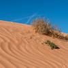 Highway Dune