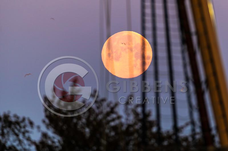 Moon & Niagara Tight