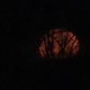 Moonset video - 12/3/17