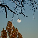 Moon hanging from tree