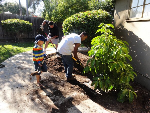 More Tree Planting