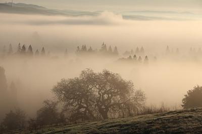 Morgan Fog