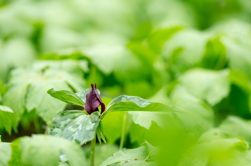 Alone in a sea of green