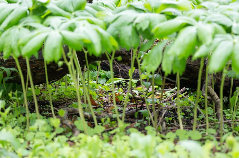 Unedited Pixie Rainforest