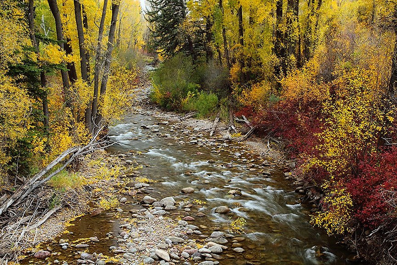 (WC-09060)  Autumn colors along Snowmass Creek near Aspen, Colorado.