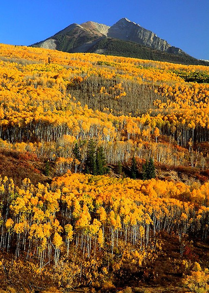 (WC-09074)  Autumn aspens and Chair Mountain - McClure Pass, Colorado.