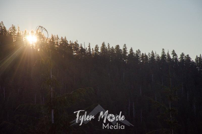 5  G Sun Through Trees